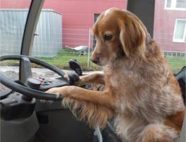 jamie james hund lenkrad steuer bagger